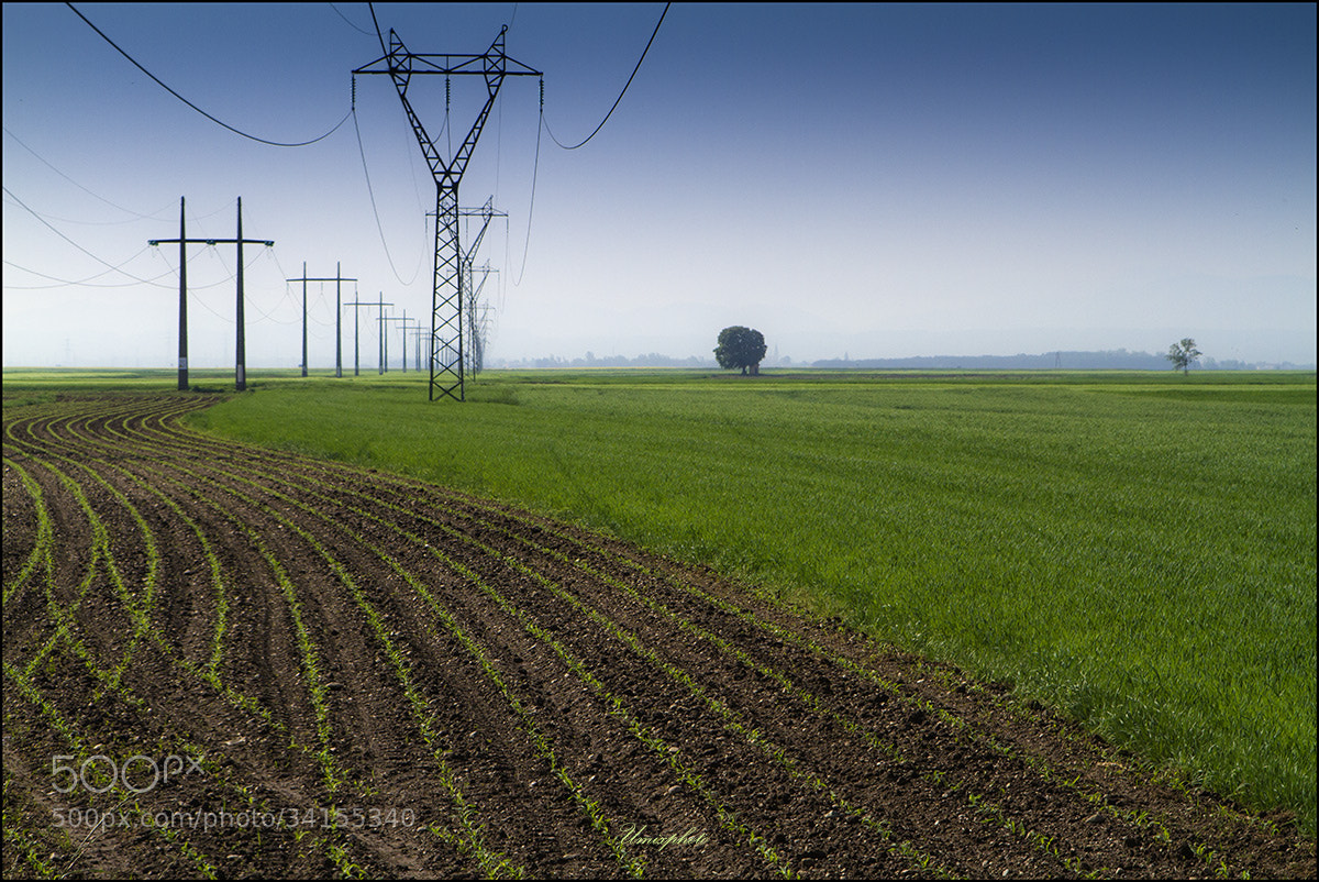 Photograph Green Lines by Jaro Miščevič on 500px