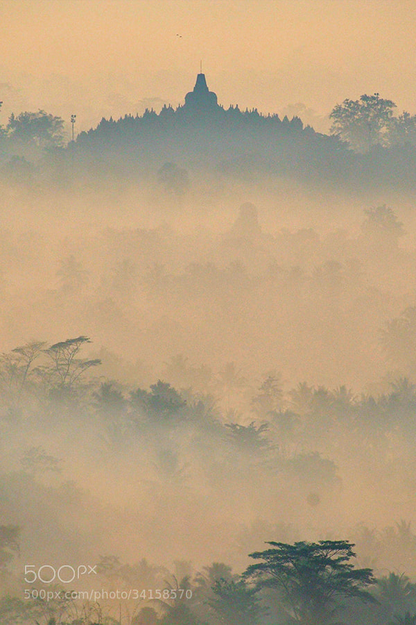Photograph Misty morning by Prabu dennaga on 500px