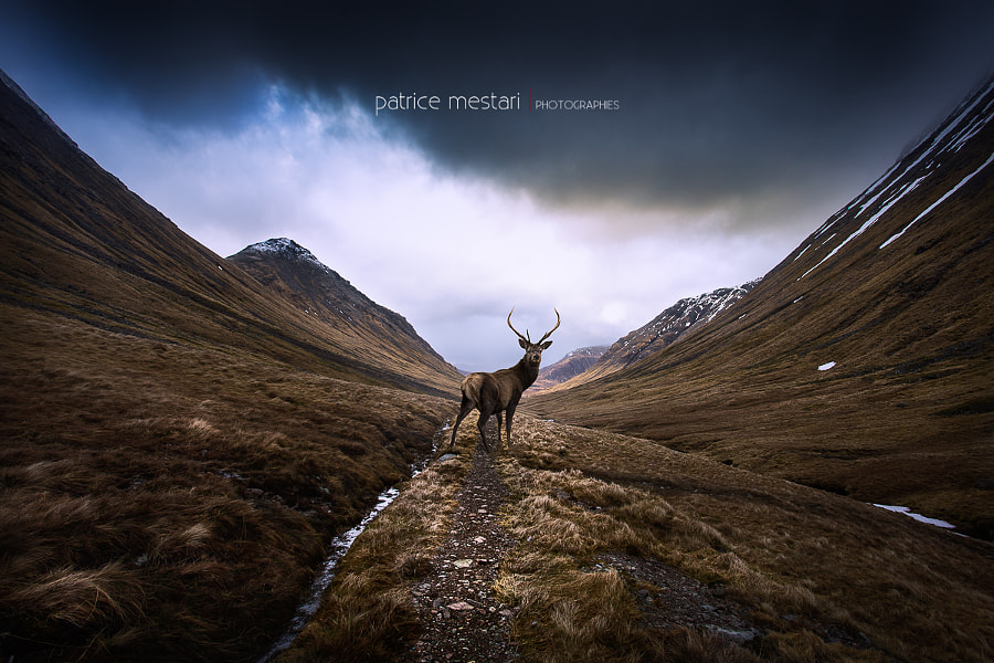 Photograph Le cerf by Patrice MESTARI on 500px
