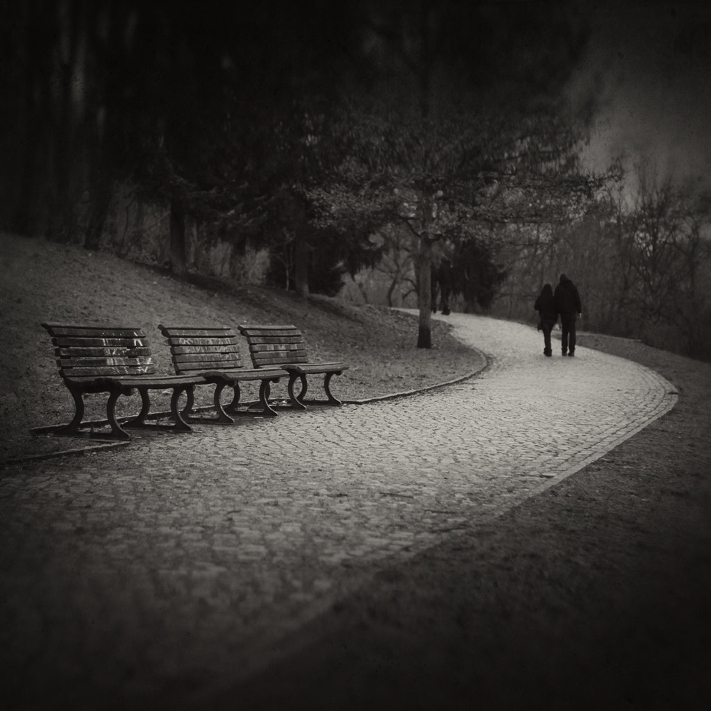 Photograph A Walk In The Park 5361 by Toni Polkowski on 500px