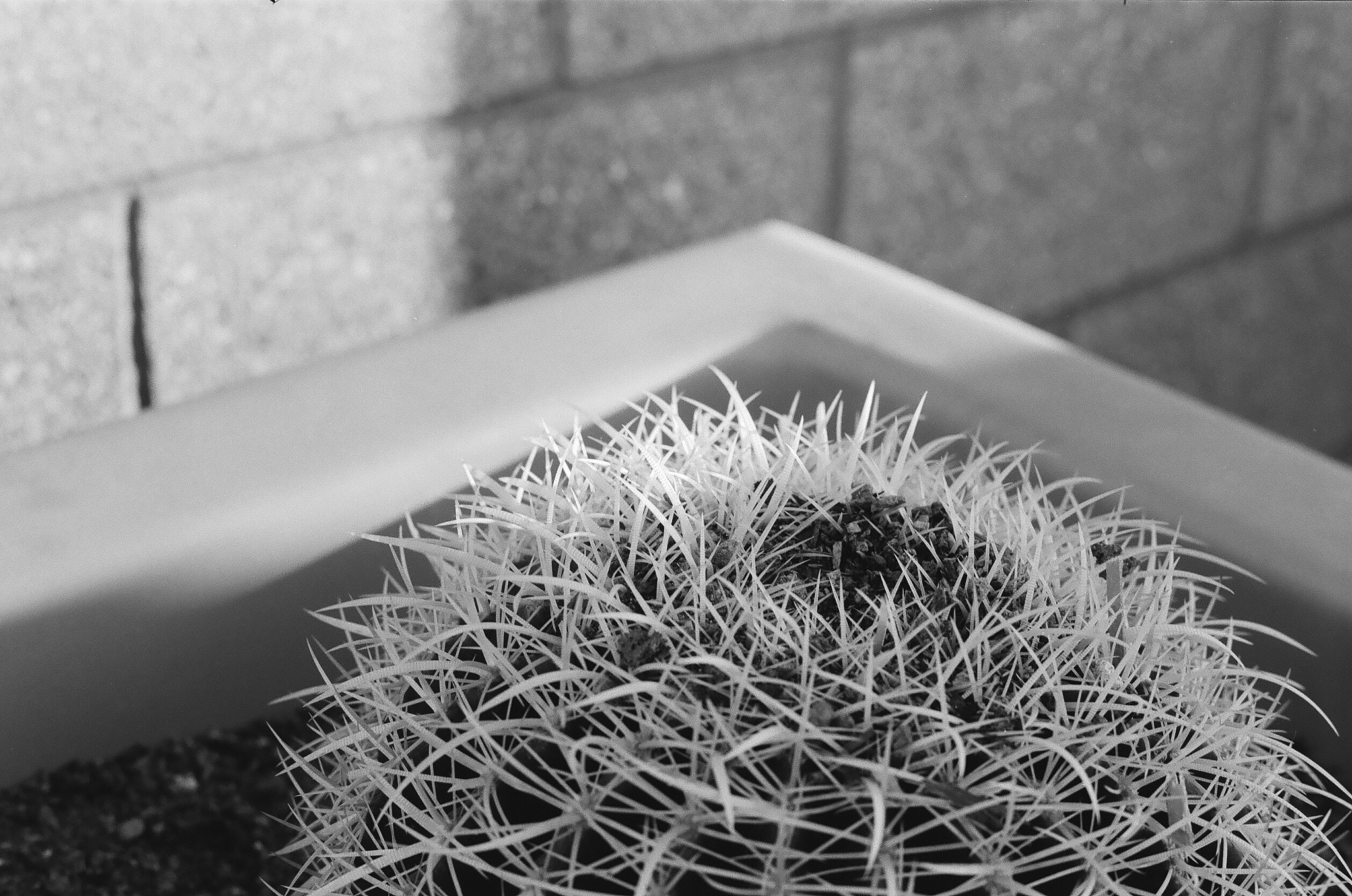Photograph Cactus. by Jordan Mulcahey on 500px