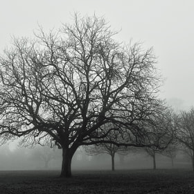 Foggy Woodthorpe by John Purchase (klythawk)) on 500px.com
