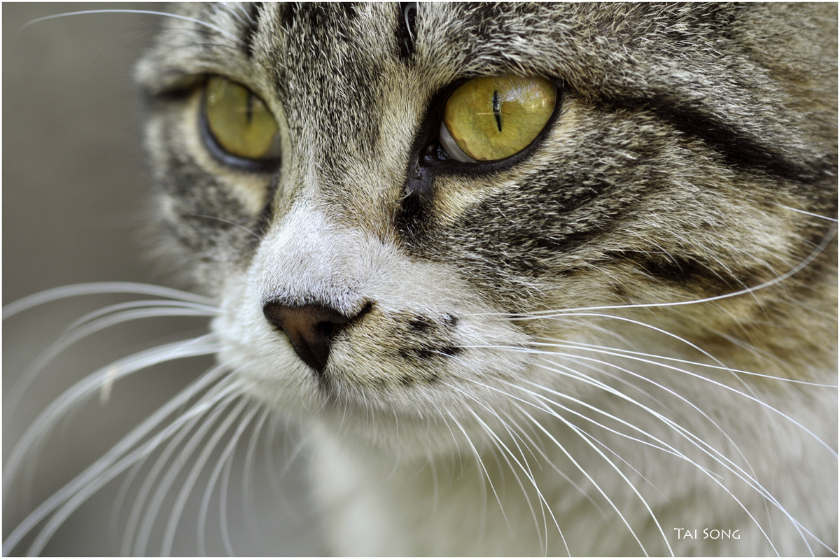 Photograph Outdoor cat. by taisa taya on 500px