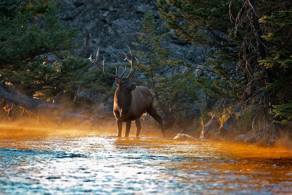 Photograph Early to Rise, Early To Rut by Buck Shreck on 500px