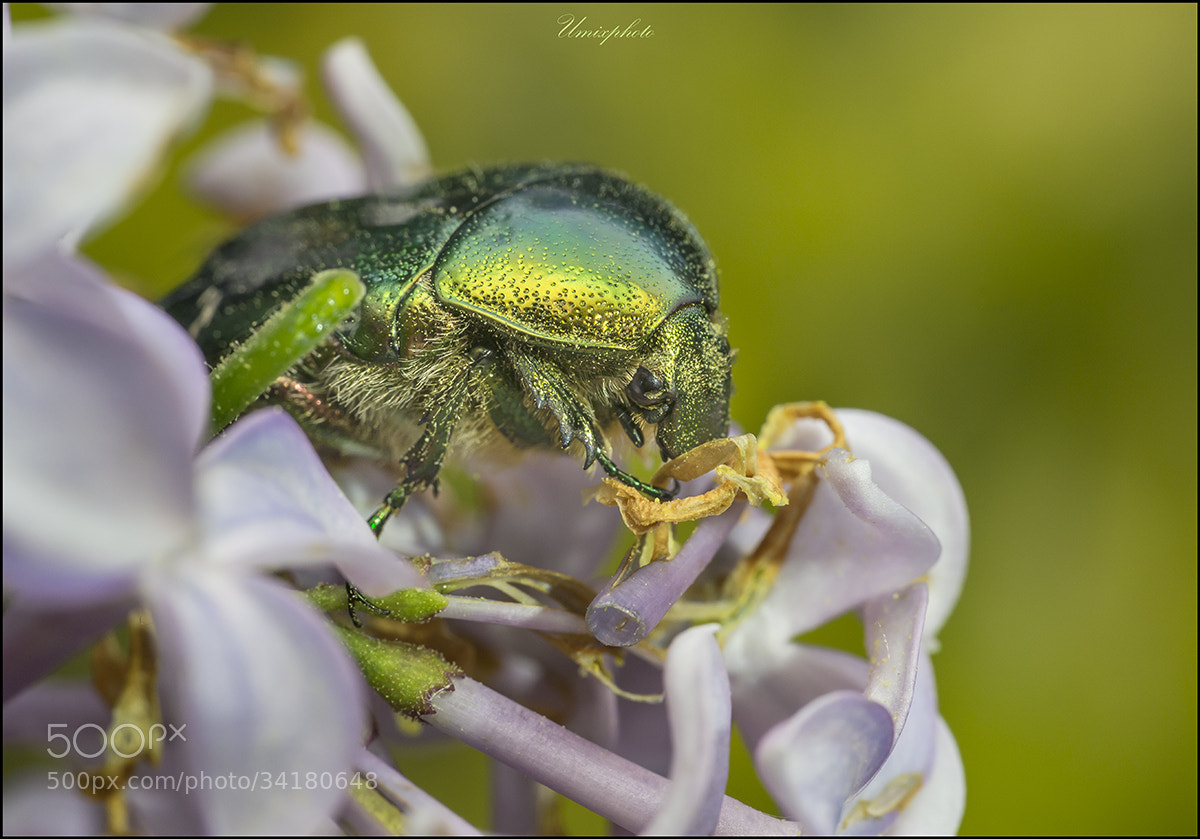 Photograph Green Beauty by Jaro Miščevič on 500px