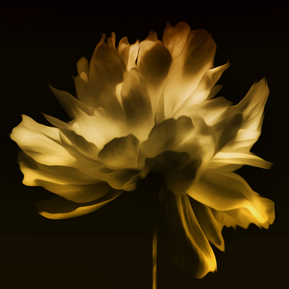 Photograph mellow yellow... by Leila Raymond on 500px