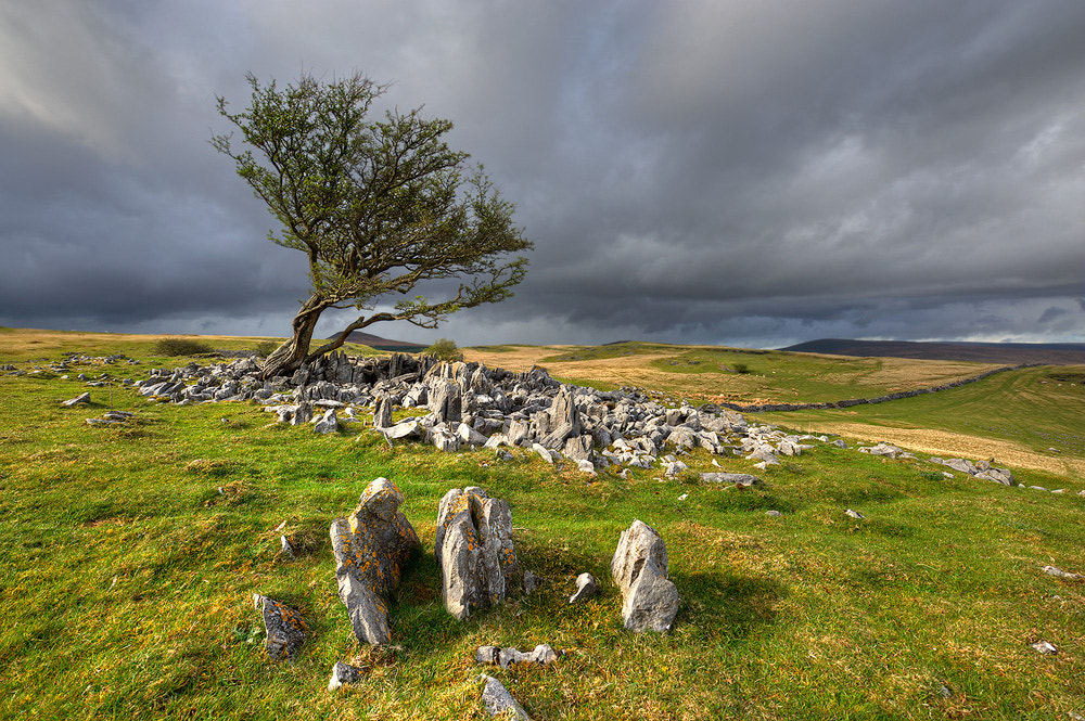 Photograph Guardians of the tree by Geoffrey Baker on 500px