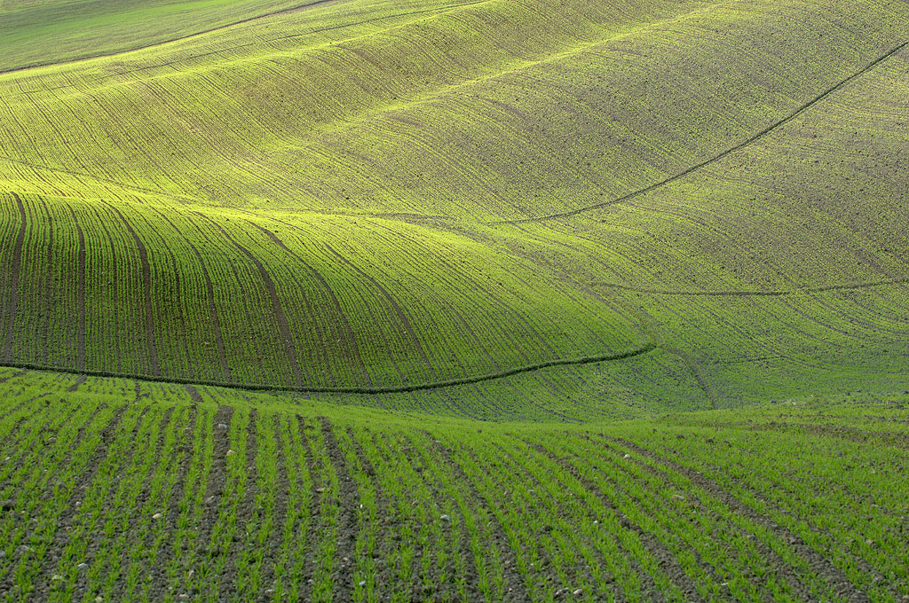 Photograph Green waves by Jure Kravanja on 500px