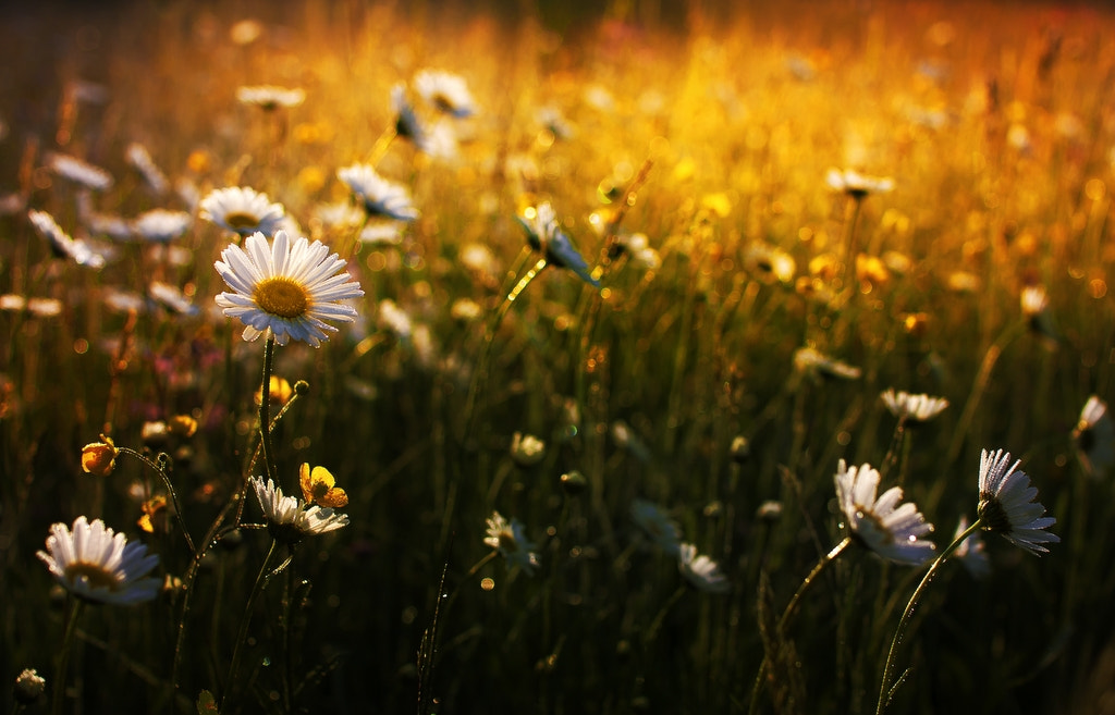 Photograph Spring morning by Kristjan Rems on 500px