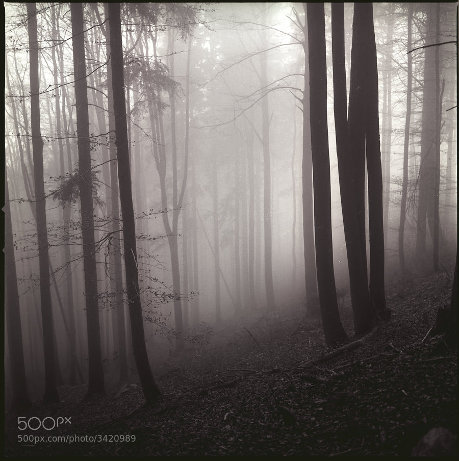 Photograph lichtenwalde_06_2k by Robert Bagnino Lubanski on 500px