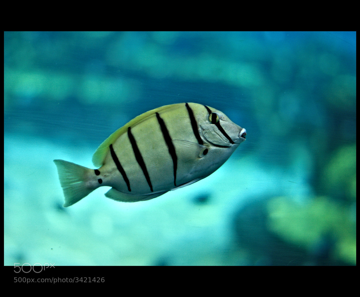 Photograph Fish.. by Adarsh Padegal on 500px