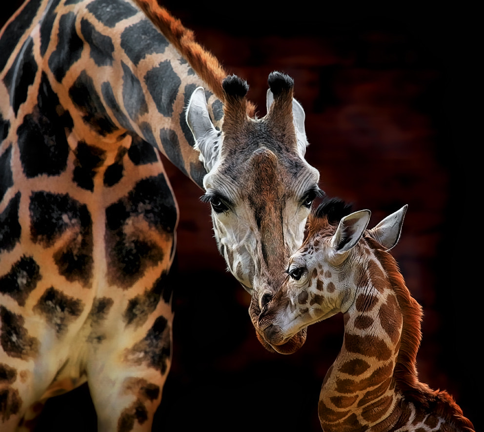 Photograph Good night, son! by Klaus Wiese on 500px