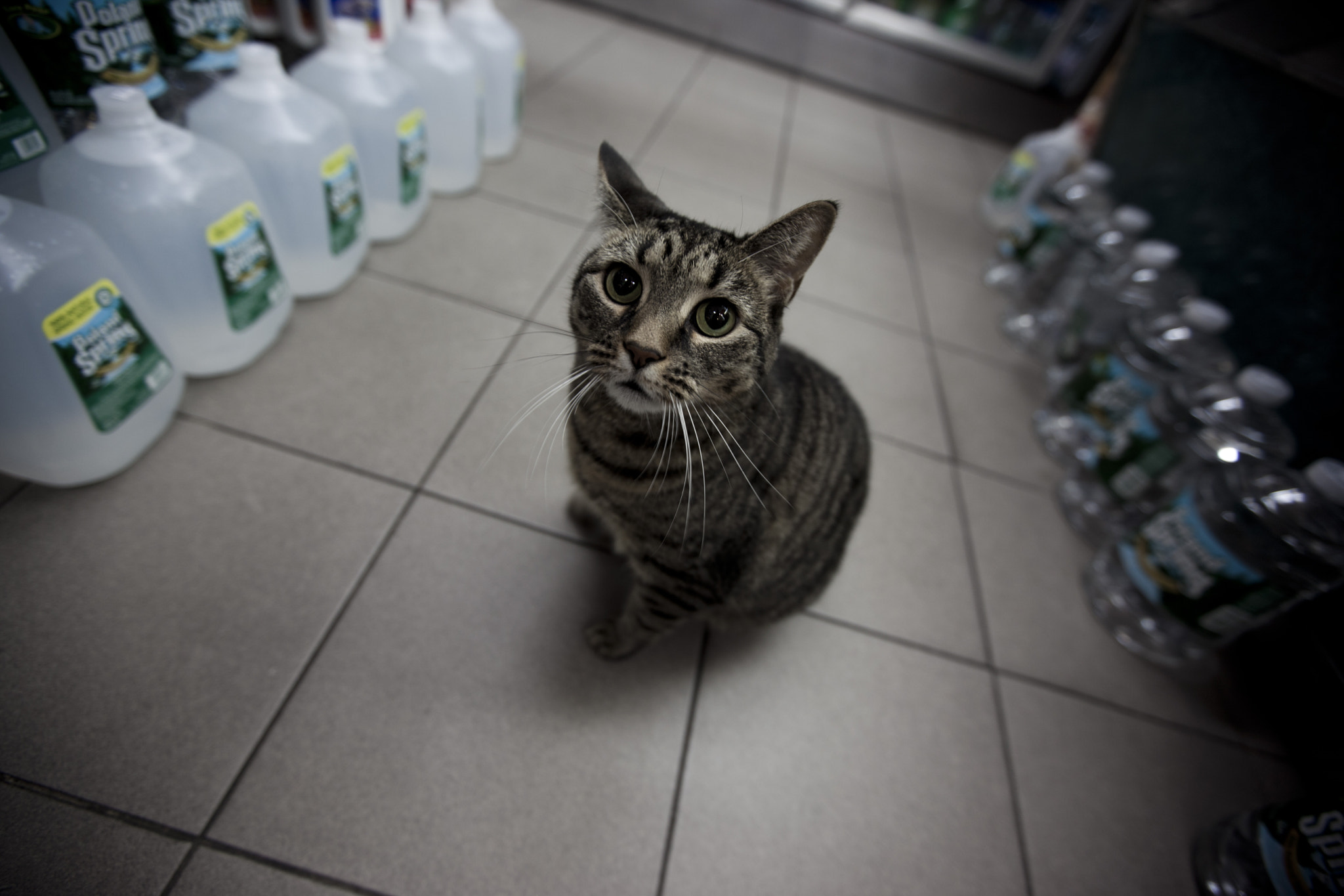 Photograph Bodega Cats by Zack McTee on 500px