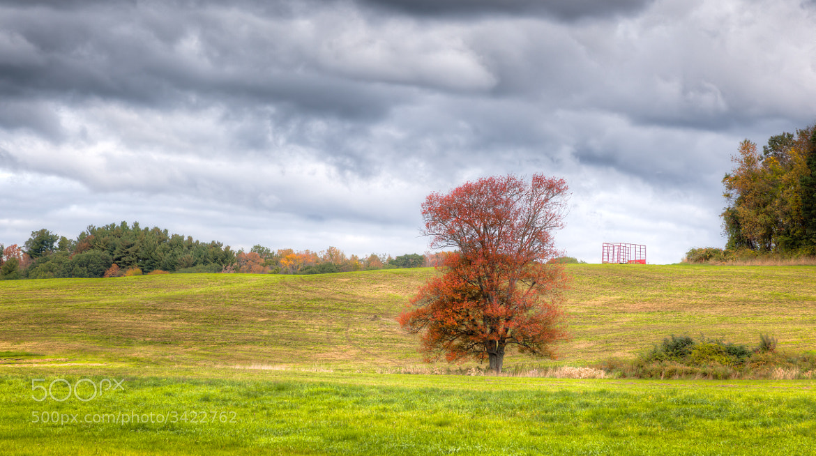 Photograph Autumn Tree, West Newbury, Massachusetts. by Stanton Champion on 500px
