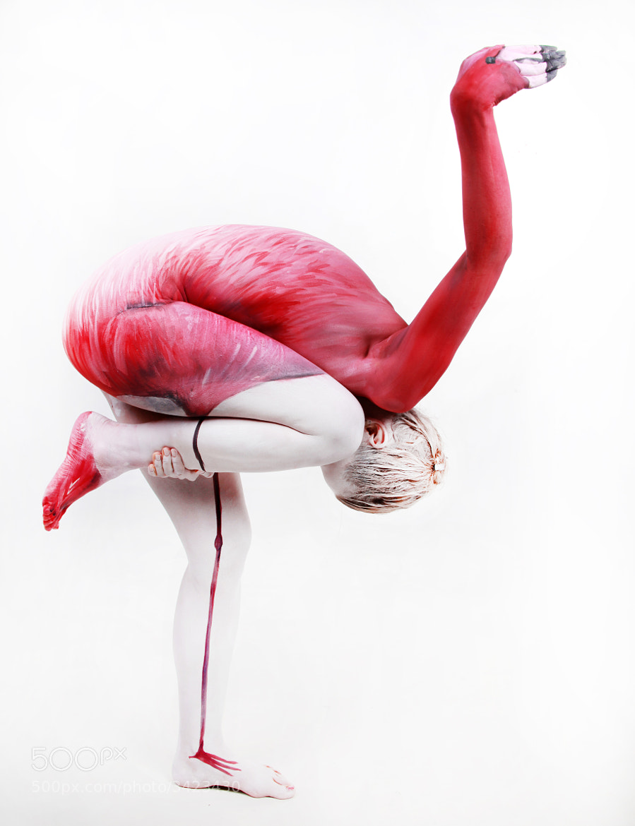 Photograph Flamingo by Thomas van de Wall on 500px
