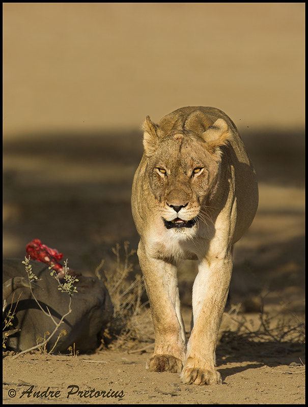 Photograph After the Kill by Andre Pretorius on 500px