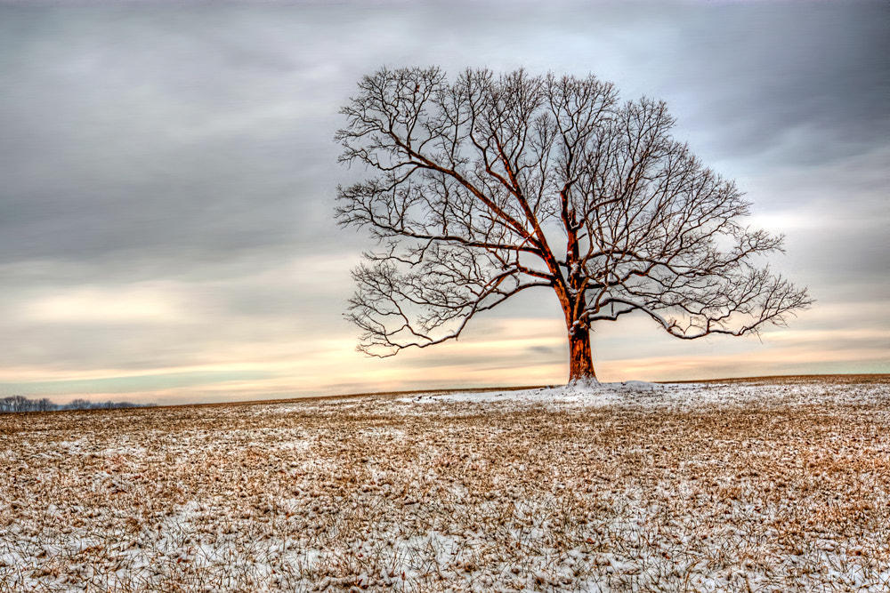 Photograph Alone with the Sun by Mark Routt on 500px