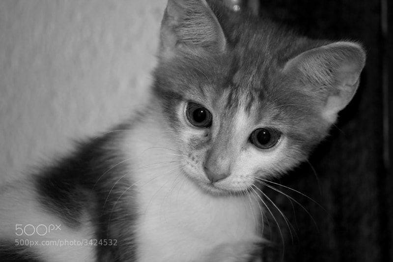 Photograph Cat by Silvia Illescas on 500px