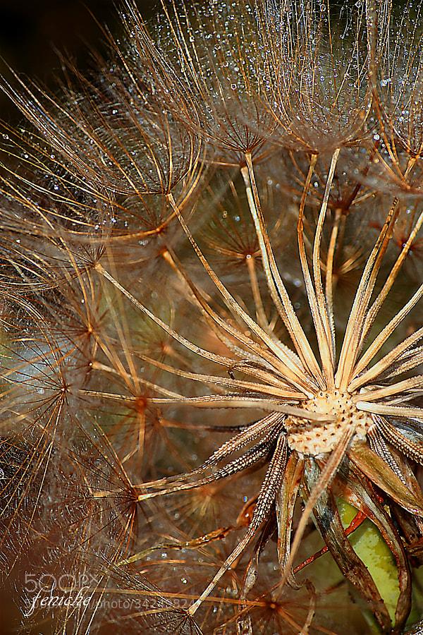 Фотография природы Фениче Фернандо на 500px