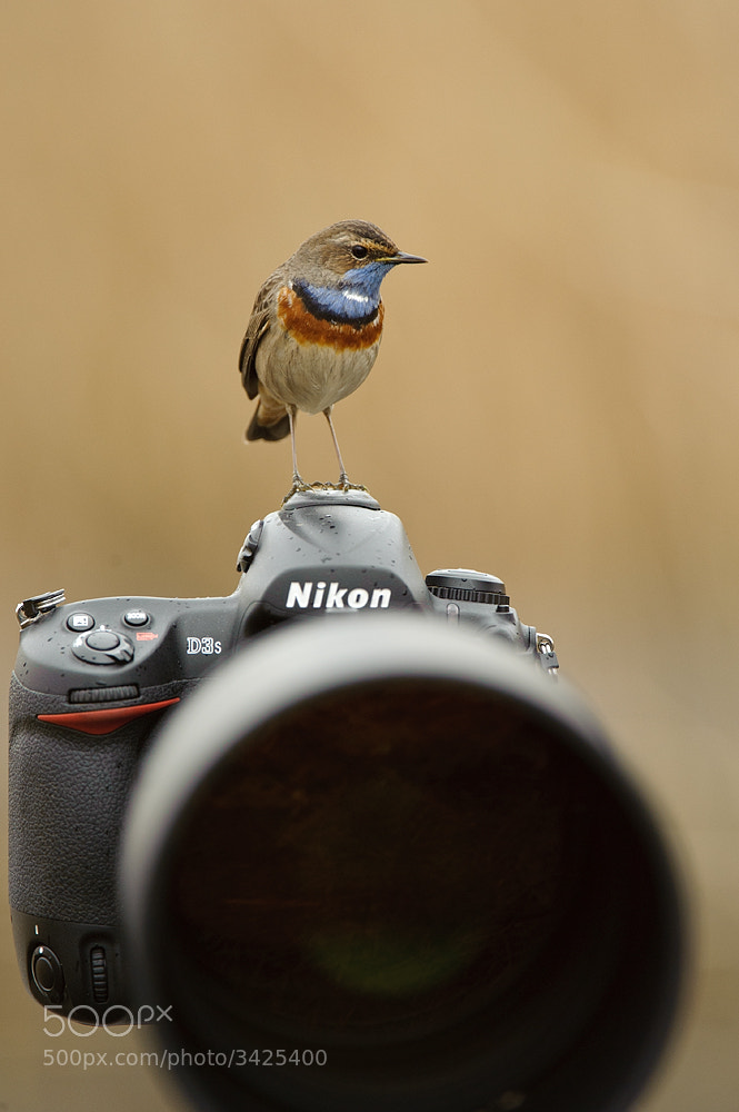 Photograph Everyone loves a Nikon... by Edwin Kats on 500px