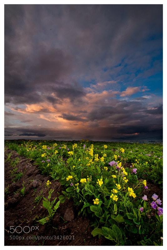 Photograph Sunset by Fernando Salas on 500px