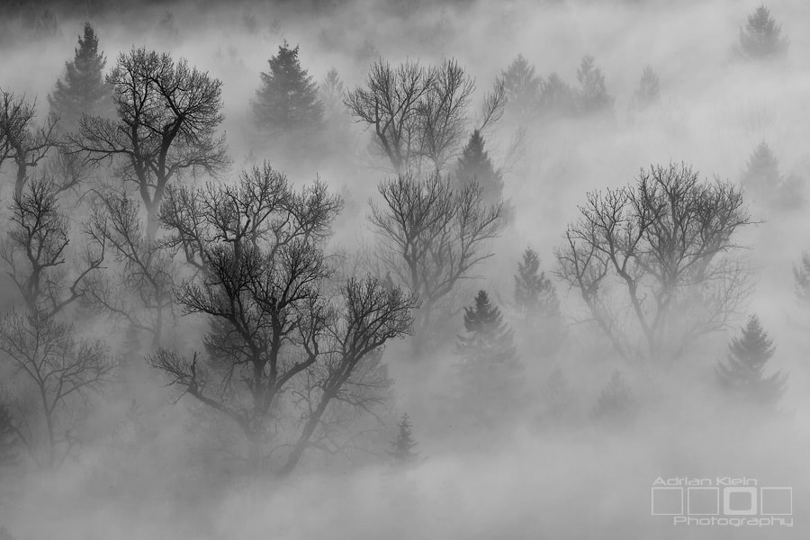 Photograph Fog Shrouded Forest by Adrian Klein on 500px