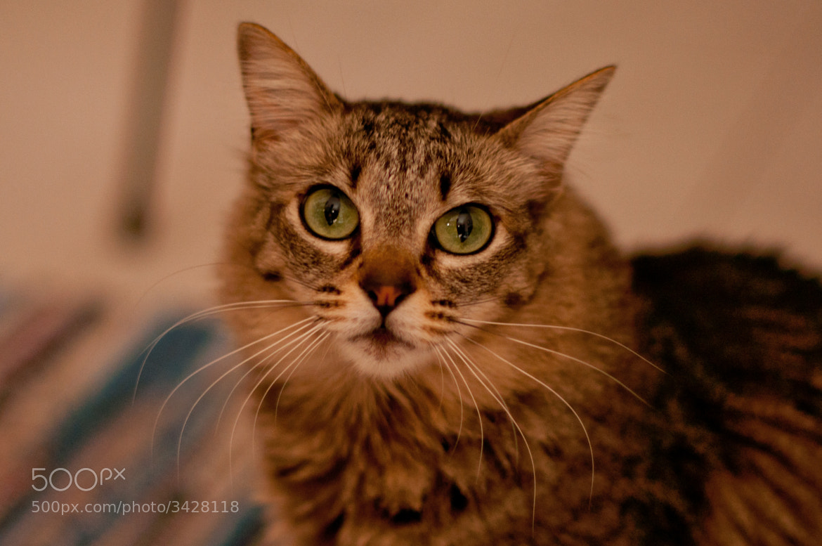 Photograph Green eyes by Martin Marilungo on 500px
