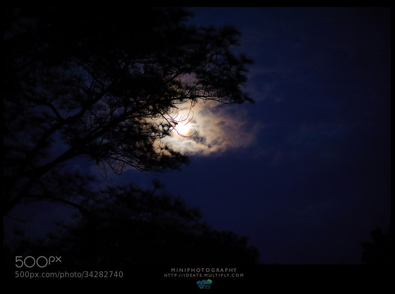Photograph Moon in the dark forest. by Mini pun on 500px