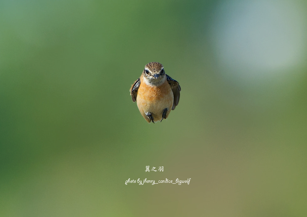 Photograph Coming by David Chiang on 500px