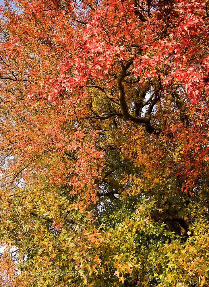 Photograph Autumn degrade by Ana Caio on 500px
