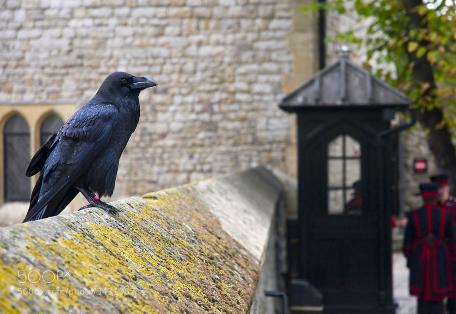 Both guardians of the Tower of London
