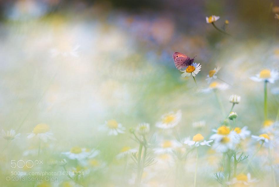 Photograph Dream by Oleg Serkiz on 500px