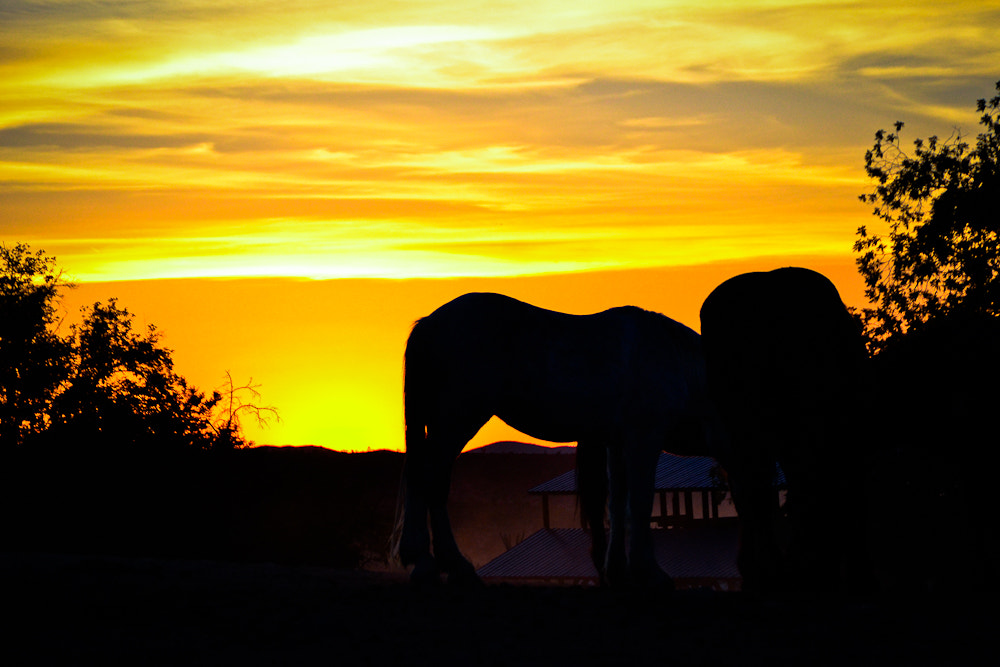 Photograph Ranch Sunset  by Zeynep K on 500px