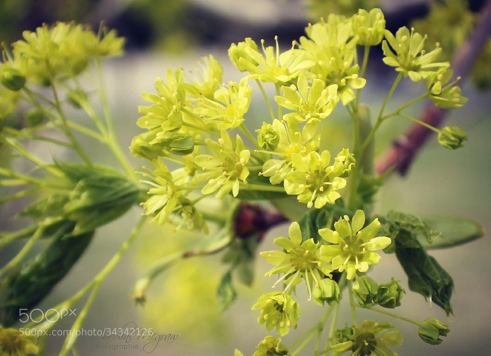 Photograph la beaute du printemps by Caroline Mcgraw on 500px