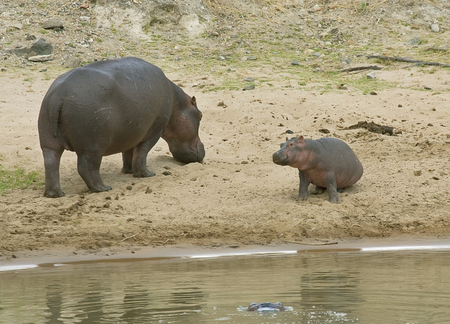 A quite old image taken our first visit to Ruaha NP, Tanzania.