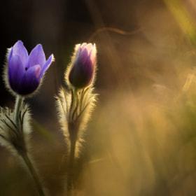 Promise of spring by Péter Koczkás (Koczka) on 500px.com