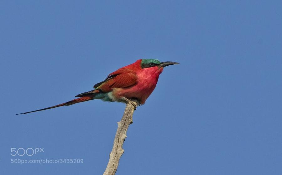 Taken in Matusadona National Park, Zimbabwe