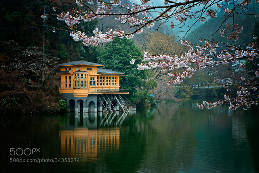 Photograph Lakeside with blossoms by MIYAMOTO Y on 500px