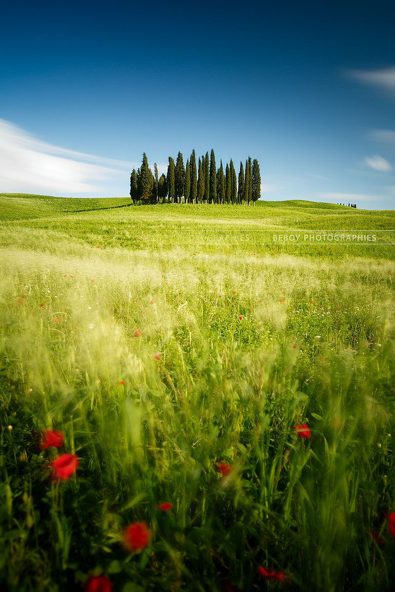 Photograph Tuscany windy fields by Beboy Photographies on 500px