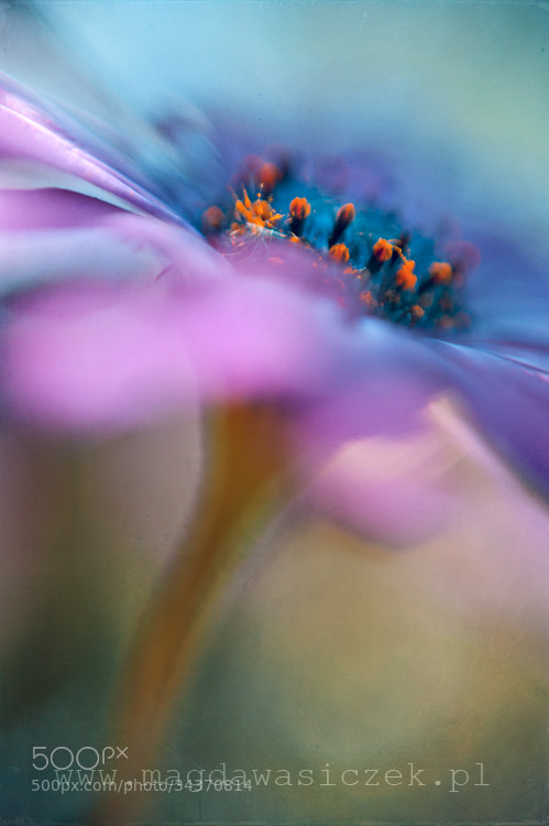 Photograph Mirage II by Magda Wasiczek on 500px