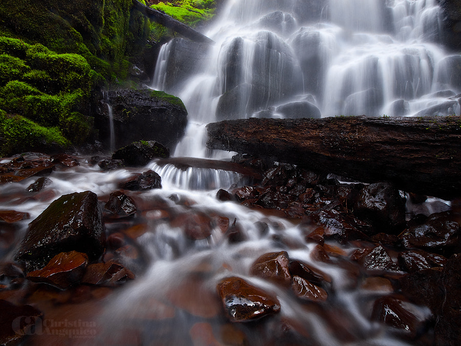 Photograph Fairy's Fall by Christina Angquico on 500px