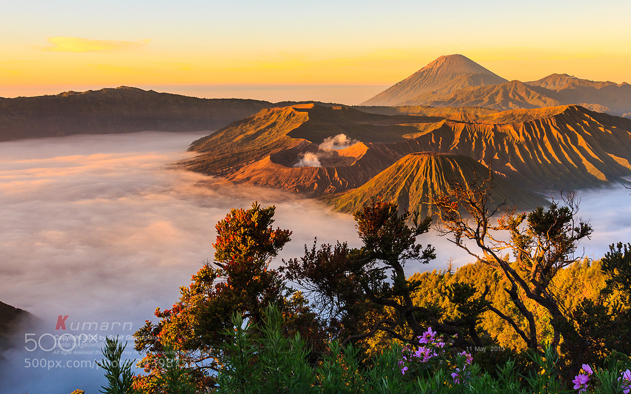 Photograph Flower of Volcano by Suwit Gamolglang on 500px