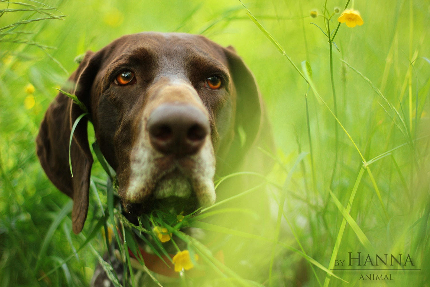 Photograph In the grass... by Hanna Králíková on 500px