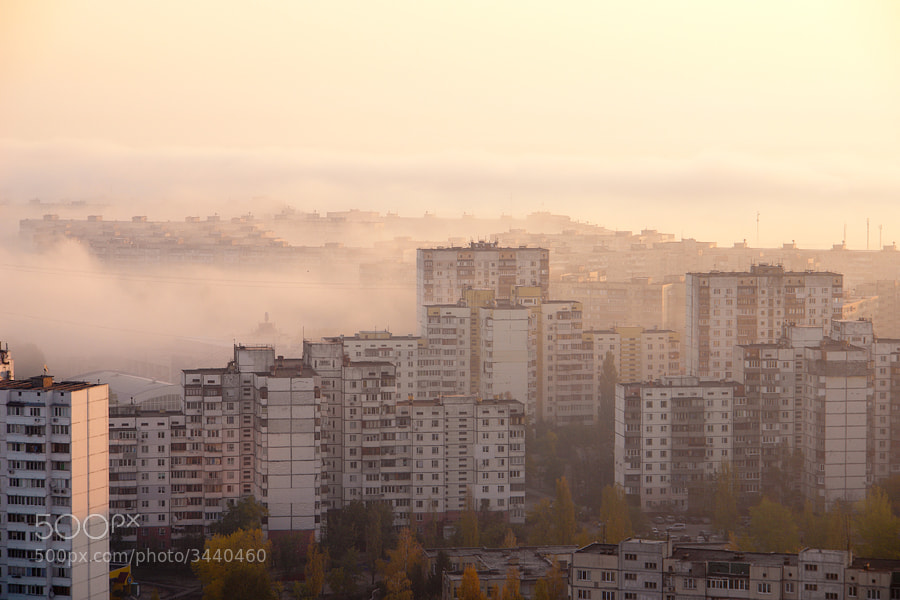 Photograph Morning Fog VI by Lev Shevchenko on 500px