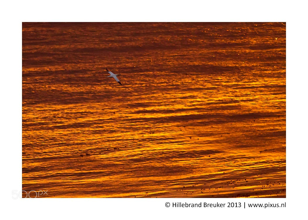 Photograph 50 shades of orange by Hillebrand Breuker on 500px
