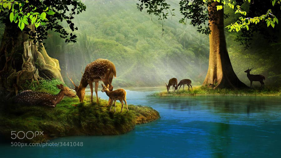 Photograph deer land #1 by budi 'ccline' on 500px