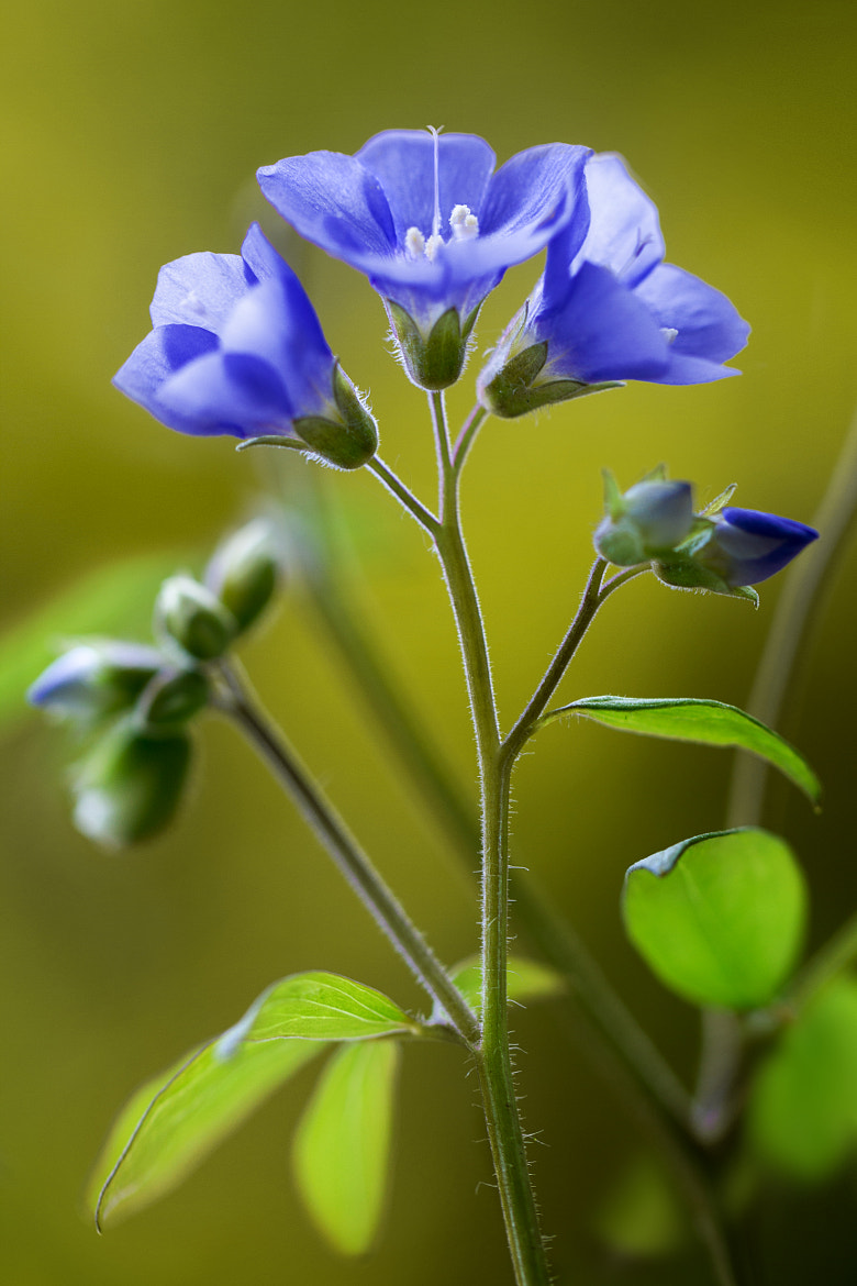 Photograph Jacobs ladder by Mandy Disher on 500px