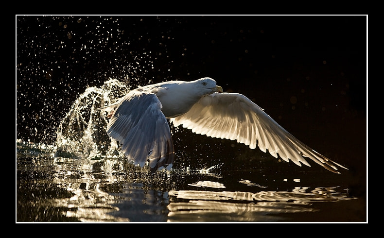 Photograph Arty farty gull by Jules Cox on 500px