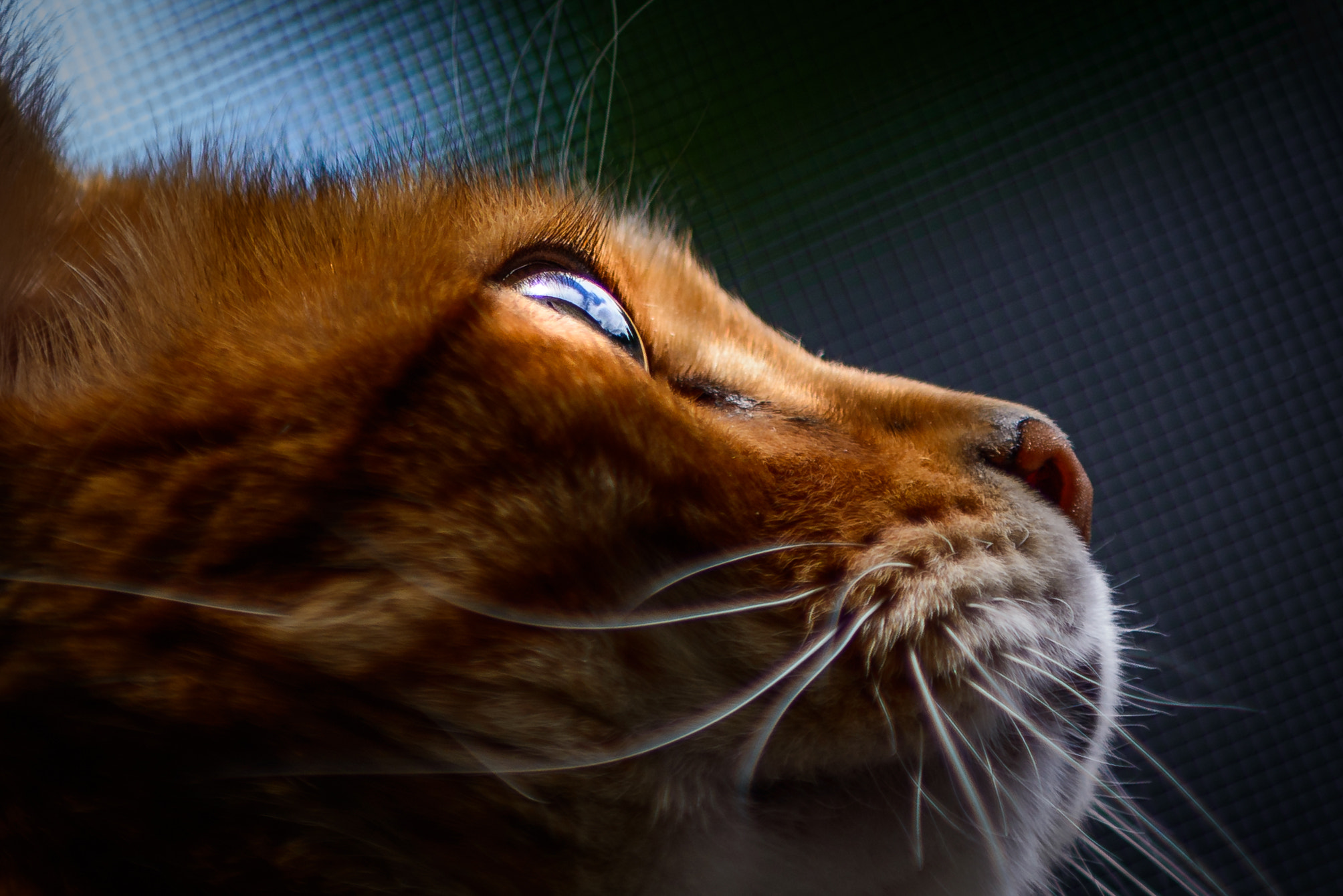 Photograph The World in a Cat's Eye by A. Mills on 500px
