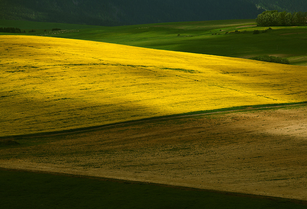 Photograph The Field #1 by Martin Sprušanský on 500px